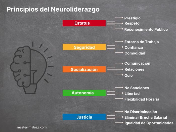 Principios del Neuroliderazgo en equipos de alto rendimiento